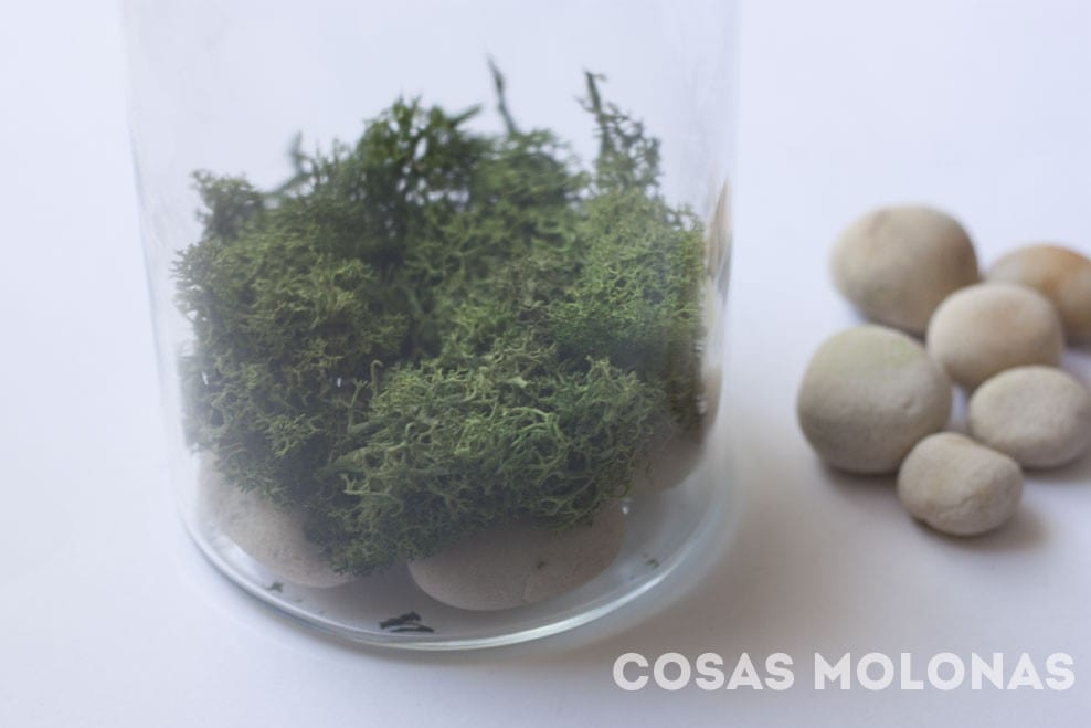 DIY: Terrarium de Star Wars