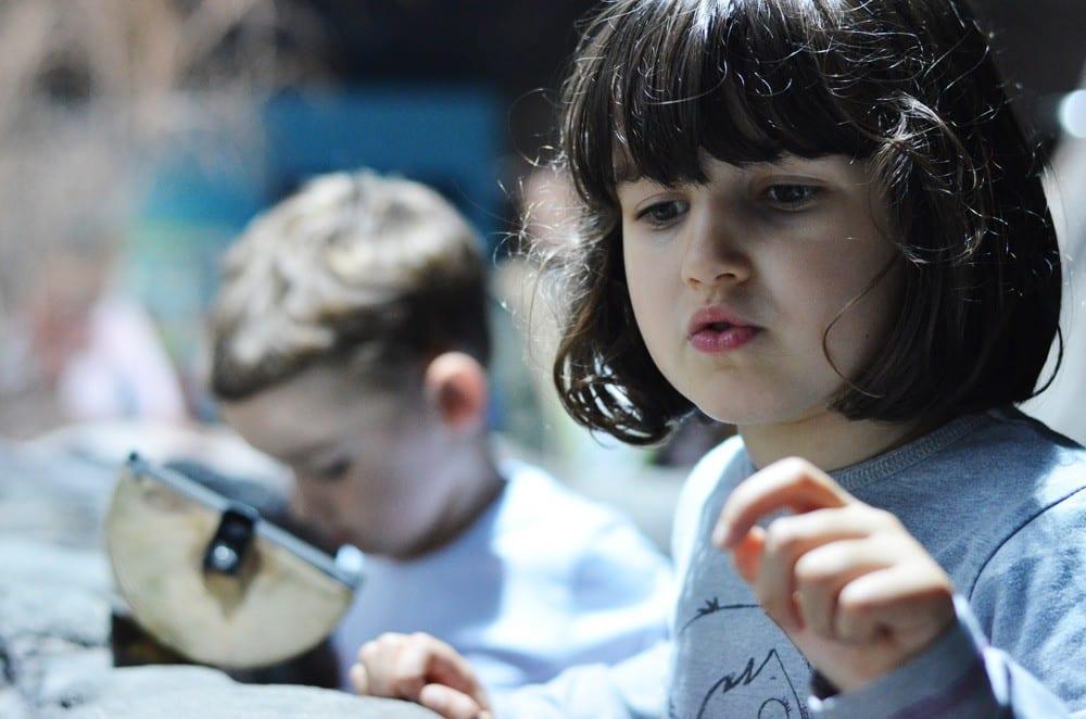 Planes con niños: El acuario de Gijón