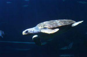 acuario8