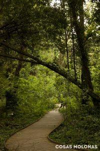 bosque-botanico