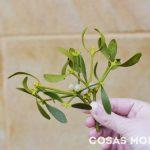 botanico-gijon-planes-navidad