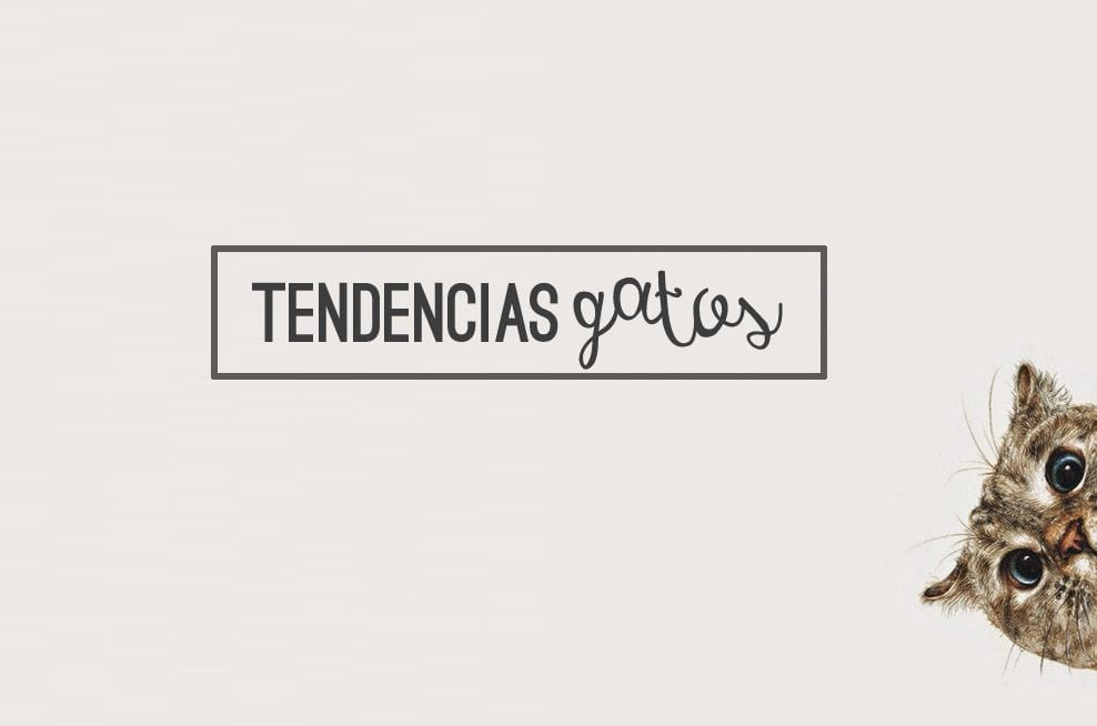 tendencias-gatos-promo